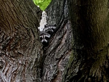Column: Kits in the Tree