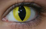 InnoVision Contact Lens- Cat eye