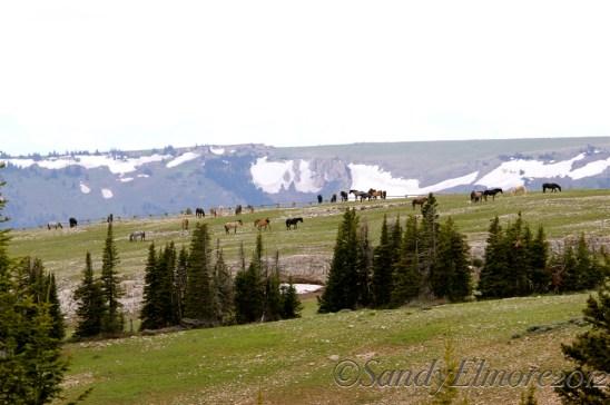 Mountain Top, June, 2012