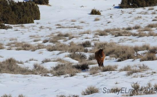 Sitting Bull 5