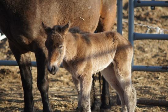 Katrina's (Swallow) new foal