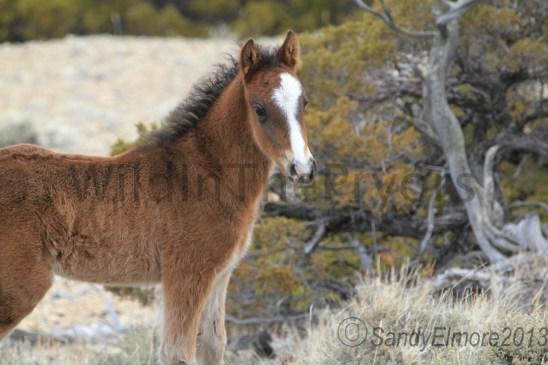 Waif's new colt, April 28, 2013