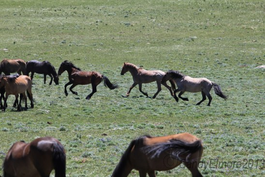 Coronado and Mescalero chase Santa Fe.