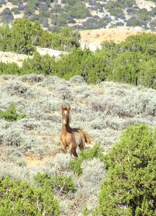 Kitalpha's new foal