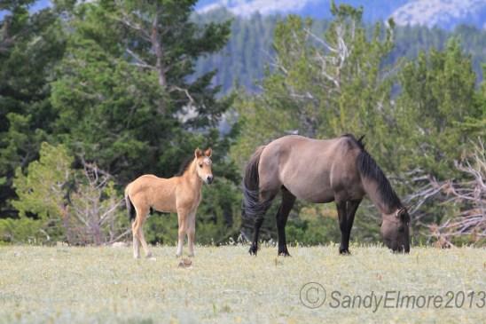 Graciana's foal