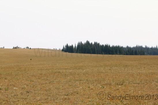 Bigfoots Meadow