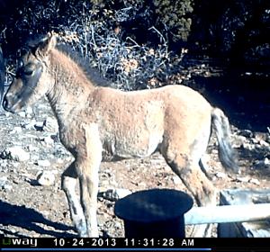 Bakken's New Foal, October 24, 2013