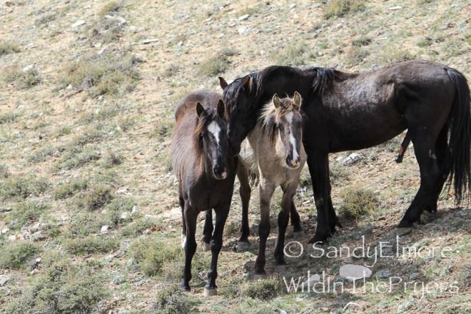 Icara, Mercuria and Hawk, May 2014