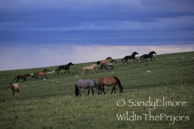 Wild in the Pryors