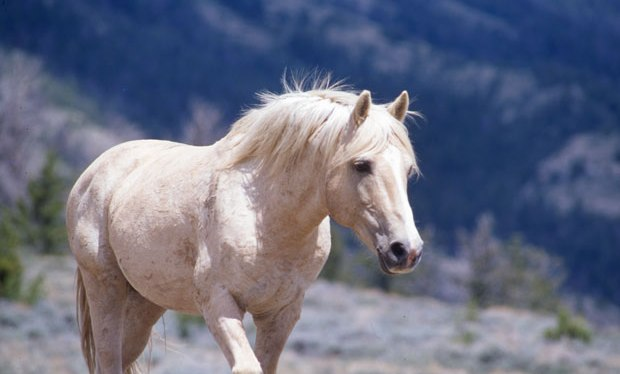 Introducing Cloud the Stallion, the World's Most Famous Wild Horse