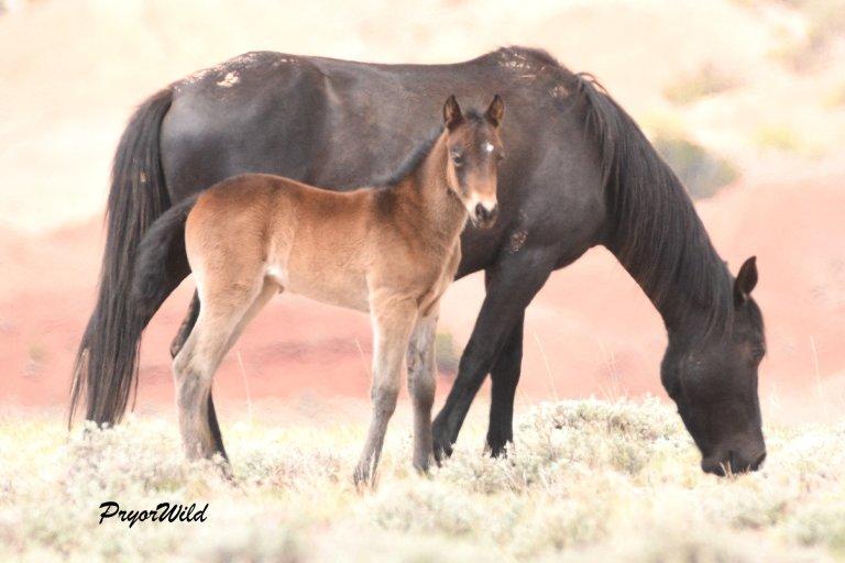 Penns Foal