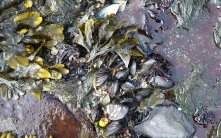 mussels and winkles