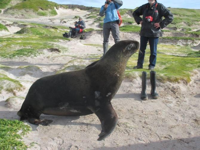 Grumpy sea lion on the beach
