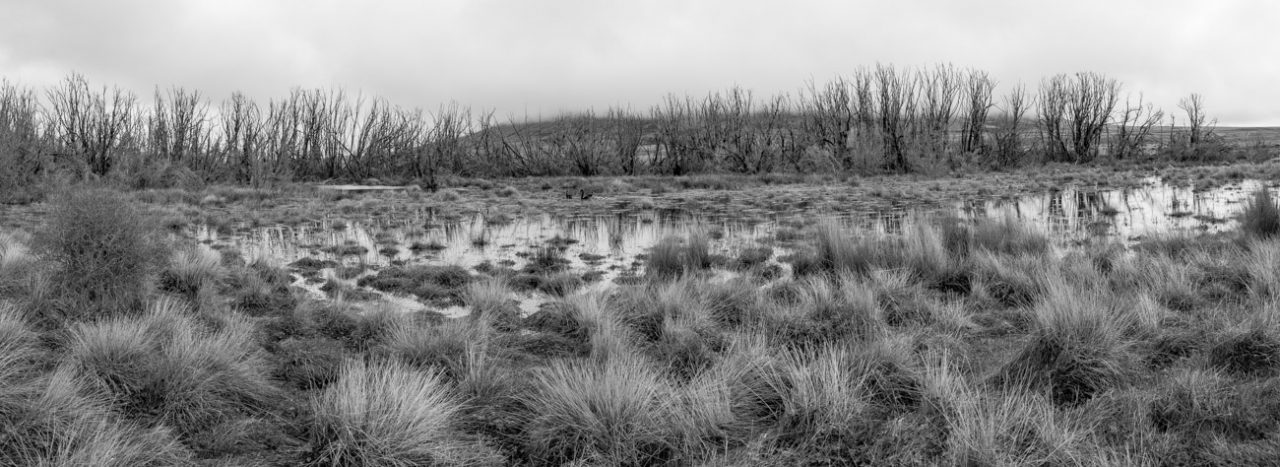 Bog on a New Zealand road trip through middle earth
