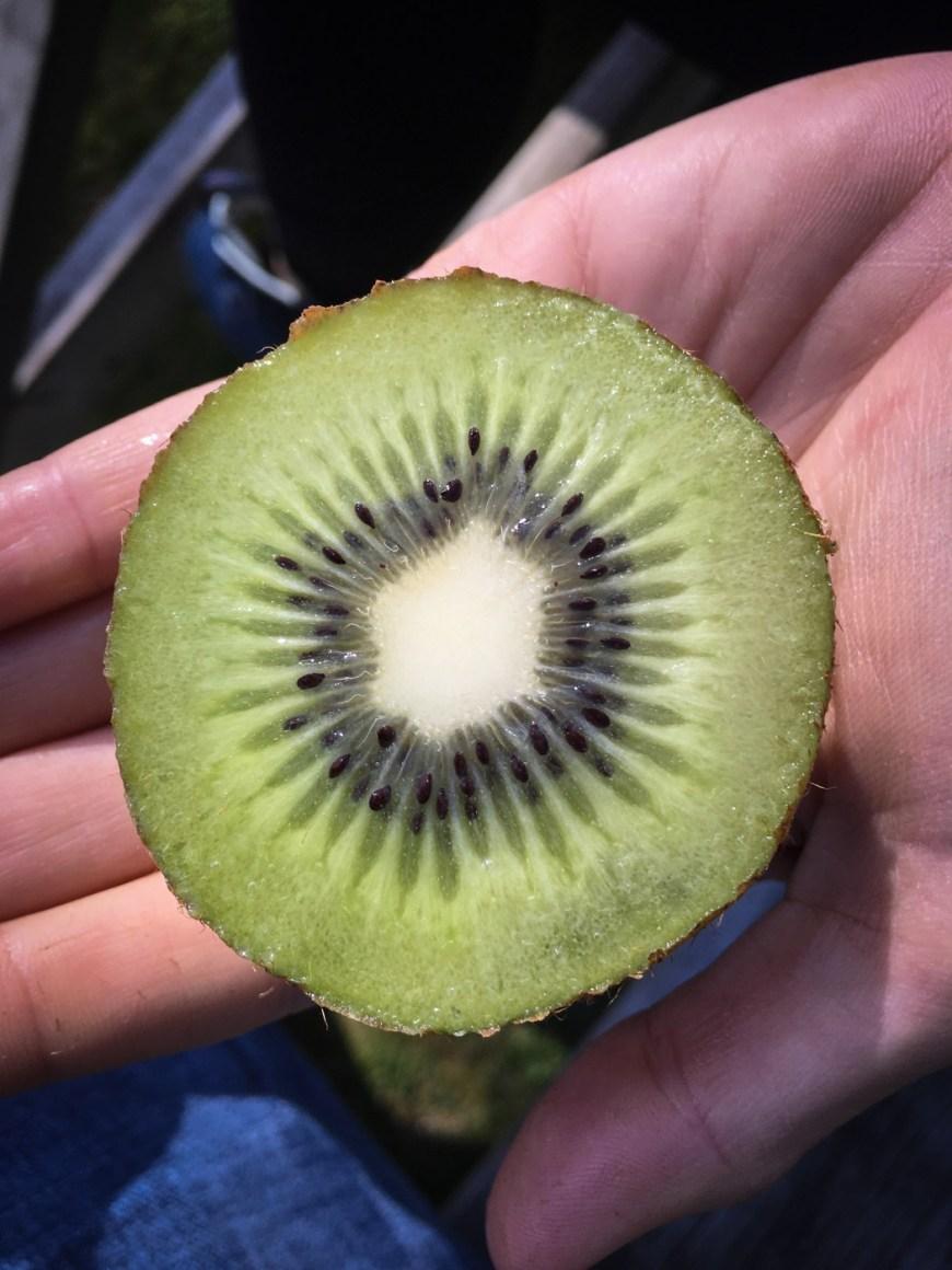 Kiwi Fruit, Te Anau, New Zealand