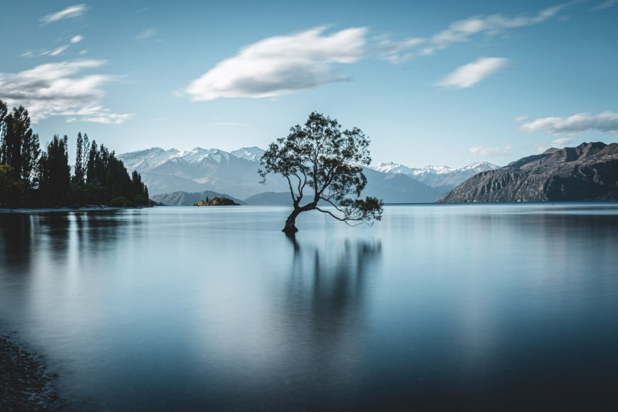 That Wanaka Tree, Wanaka, South Island, New Zealand