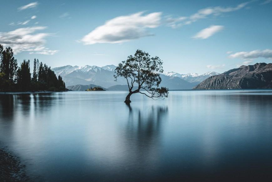 That Wanaka Tree, Wanaka, South Island, New Zealand