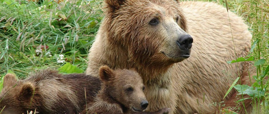 Bear Encounter Image Source: The WIldlife Society