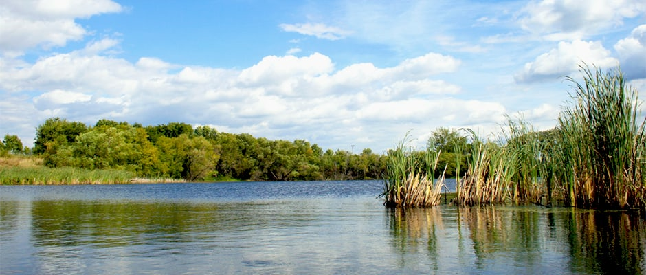 Minnesota Chapter To Host Wetland Habitat Workshop The