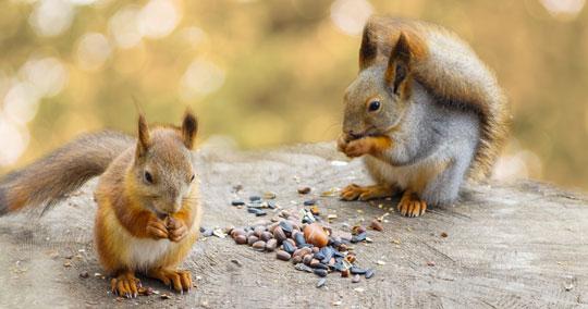 squirrel removal control wildlife