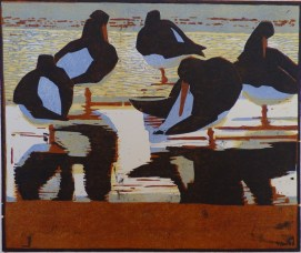 Oystercatchers, Evening