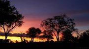 Sunsets in Africa never get old. Only more beautiful.
