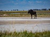 December 2016 – Nata Salt Pans, Botswana