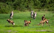 The interactions of these wild dogs was so incredible to observe.