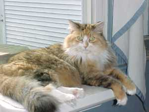 Free-range house cats a source of zoonotic disease, such as parasitic worms. Photo by Stephen M. Vantassel.