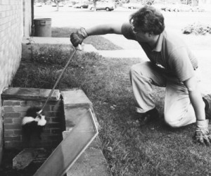 Stephen M. Vantassel rescuing a skunk trapped in a window well.