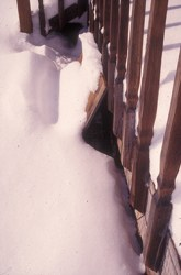 Board used to protect a cage trap from snow. Photo by Stephen M. Vantassel.