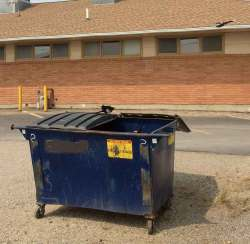 Birds investigating a dumpster for food. Photo by Stephen M. Vantassel.