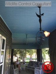 Blue ceiling on this porch allegedly convinces birds not to nest there.