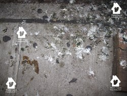 Picture of pigeon droppings splattered on sidewalk.