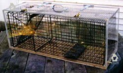 Carbon dioxide euthanasia chamber for wildlife