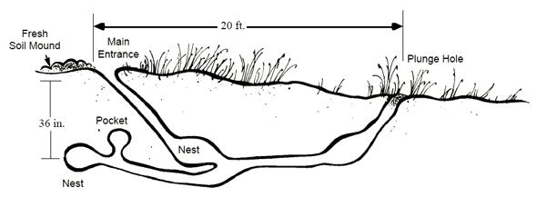 Burrow Diagram Wood Chuck