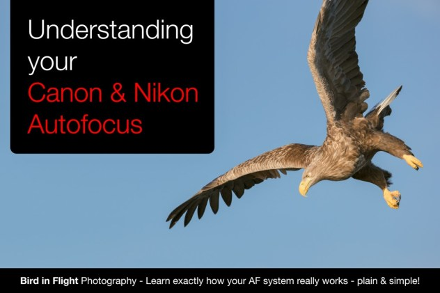auto focus settings for bird in flight photography