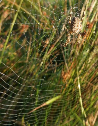 Spiders&Webs_-1000307