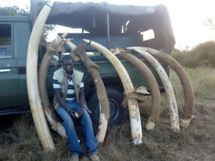 Nature and Prevalence of Wildlife Crimes