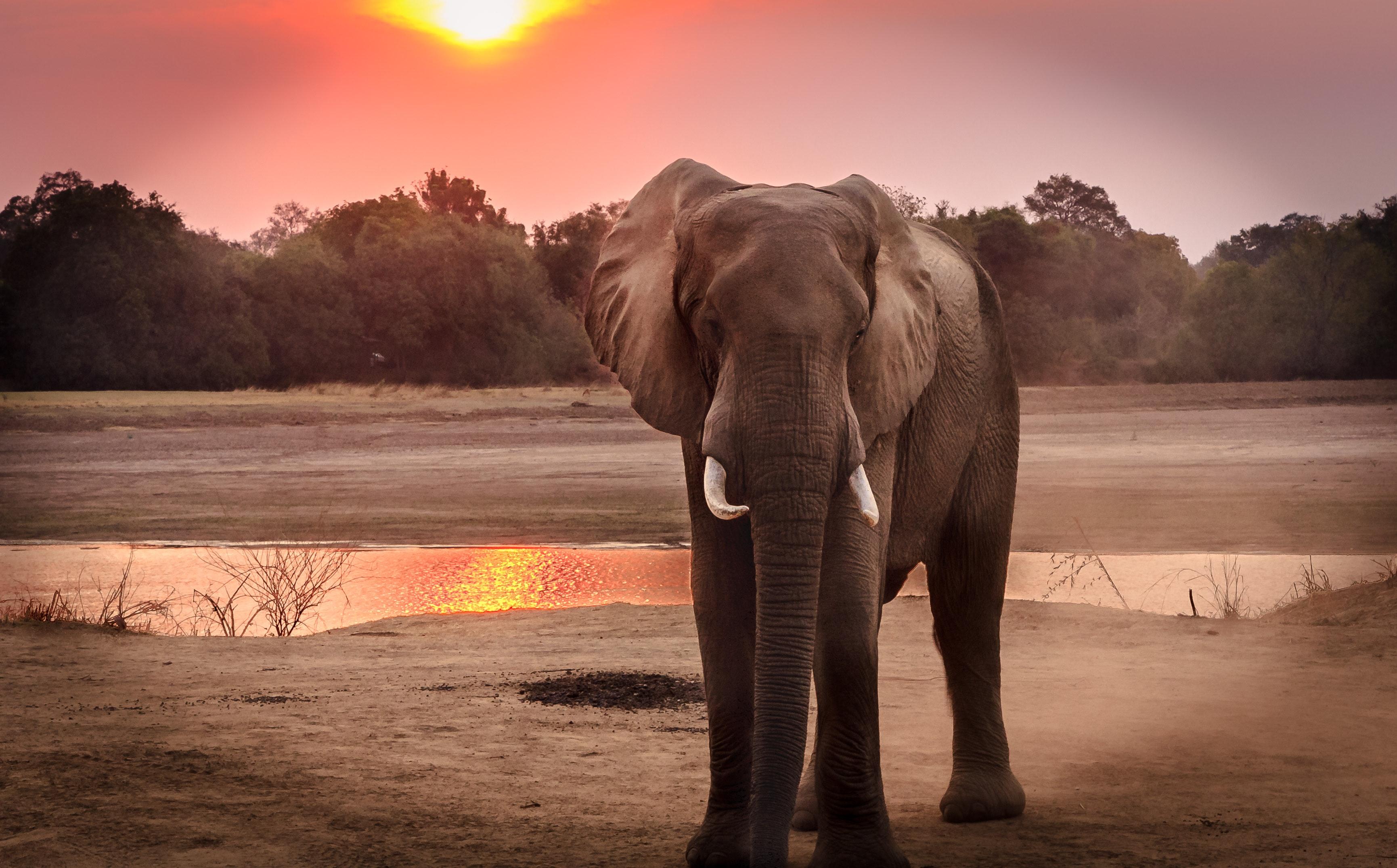 Offences in Botswana's Wildlife Legislation