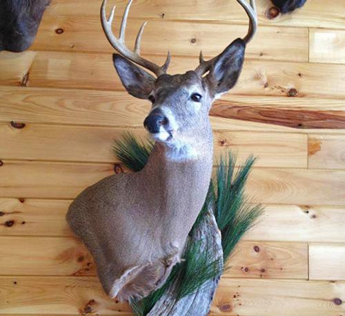 Deer Mount with scenery