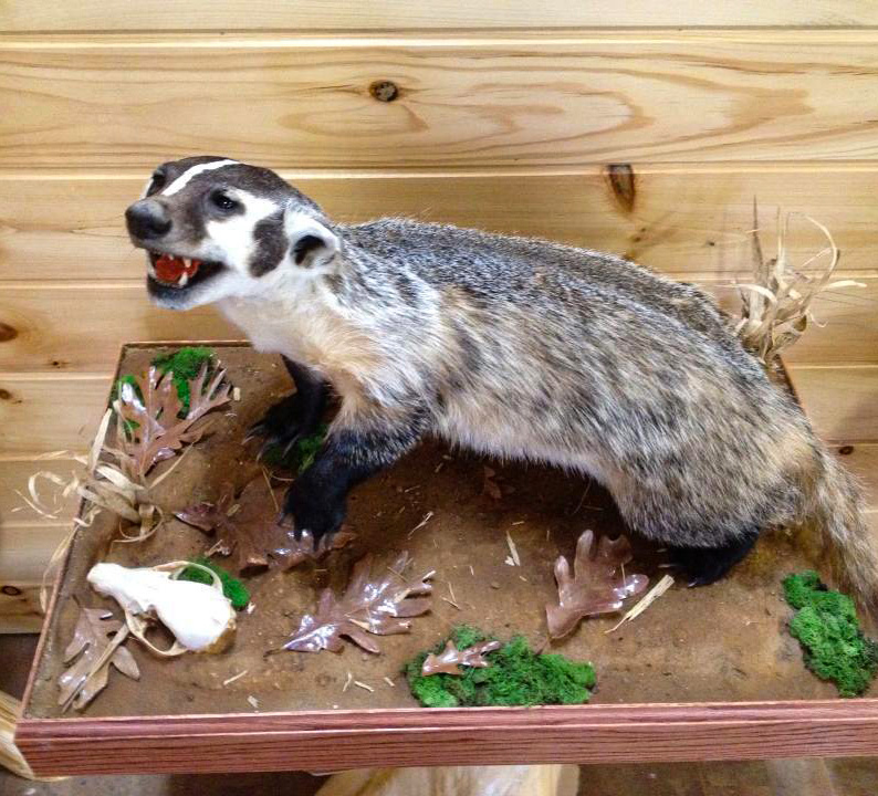 Badger Mount