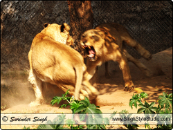야생 동물 사진술