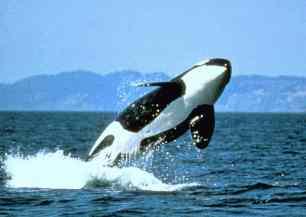 orcabreach