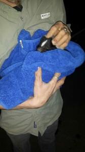 Skunk Removal Franklin Brentwood Green Hills TN