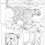 Kids Korner » Wildlife Research & Conservation