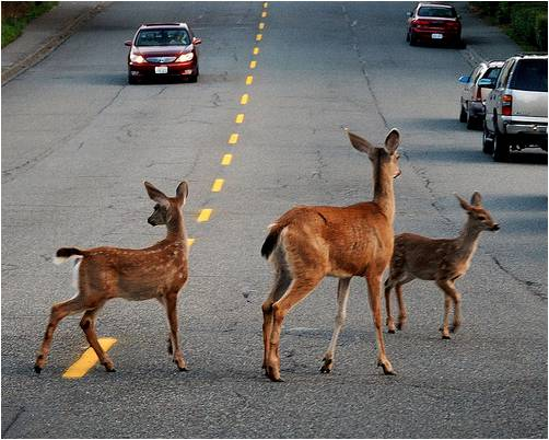 human wildlife conflict के लिए चित्र परिणाम