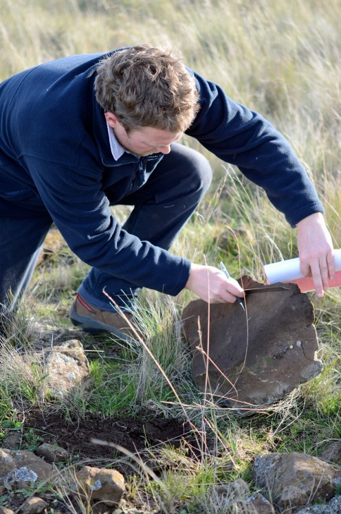 Tim McGrath measures the large flat rock (temporariliy lifted) under which a grassland earless dragon had made its home in a burrow - photo credit Anna MacDonald