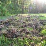 image showing destructin by wild hogs