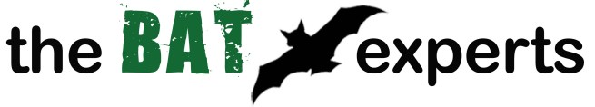 Bat Removal Experts